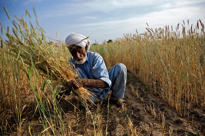 punjab-farmers-smartphone